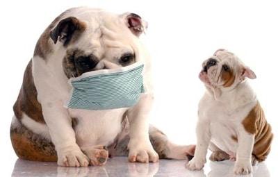allergie dog