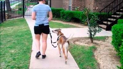 exercise with the dog