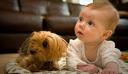 baby or pet