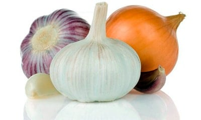 onion and garlic in the food of a dog