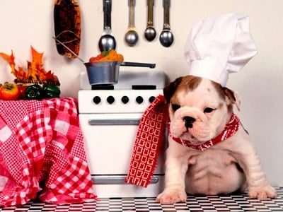 doggy cooking