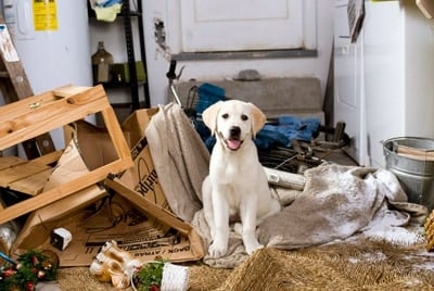 dog broke things