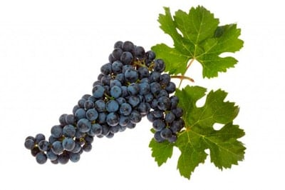 grapes are toxic to dogs