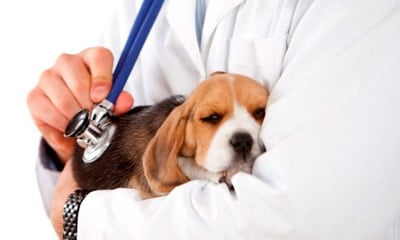 doggy and vet